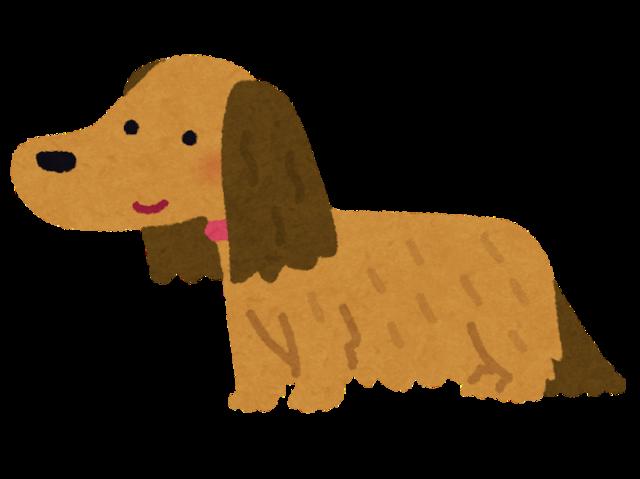 dog_dachshund_choumou.png